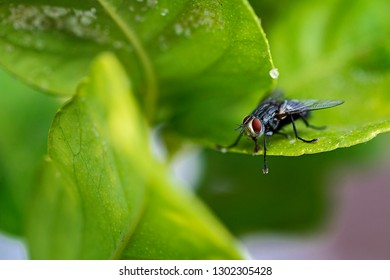 Close up of a fly on a leaf.