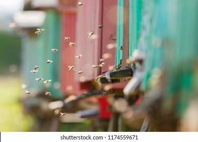 Close up of flying bees. Wooden beehive and bees. A large group of bees flies to the hive. The army of bees is circling near the area of the hive.