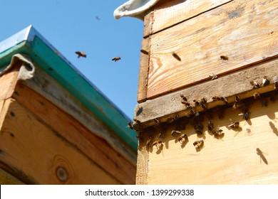 Close up of flying bees. Wooden beehive and bees. Plenty of bees at the entrance of old beehive in apiary. Working bees on plank. Frames of a beehive.