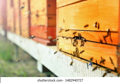 Close up of flying bees. Wooden beehive and bees.