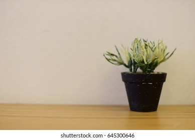 Close focus, Plant