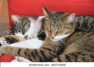 Gros plan sur un chat endormi au premier plan tout en restant allongé sur un autre chat défocalisé à l'arrière-plan.