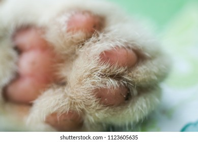 Bombyx Kitty Paw