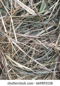 Close up of a fresh bale of hay