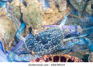 Close up fresh Blue Swimming Crab for sale in seafood market
