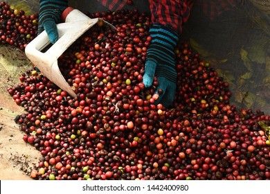 close up of  fresh coffee beans for background