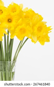 Close up of fresh cut yellow trumpet daffodils in glass vase. Vertical composition with copy space.