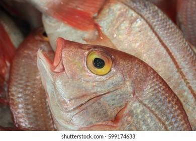 Close up to fresh fish