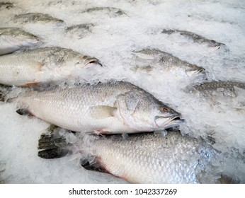 Close up of fresh fishes Giant Perch, barramundi, silver perch, white perch, white snapper or sea basses in cool ice. Fishes of mass product from local fresh market for food industries.