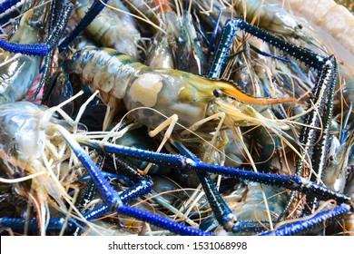 close up fresh giant river prawns or giant freshwater prawns