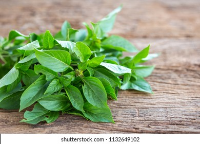 Close up fresh green basil leaf on wooden table background. Food concept