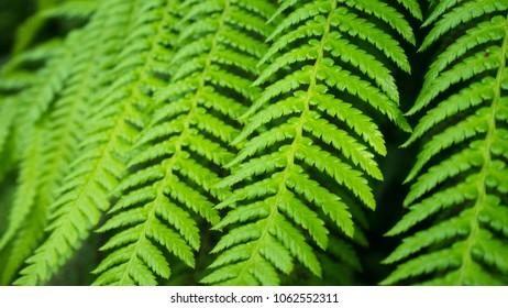Close up of Fresh green fern leaf texture background - Shutterstock ID 1062552311