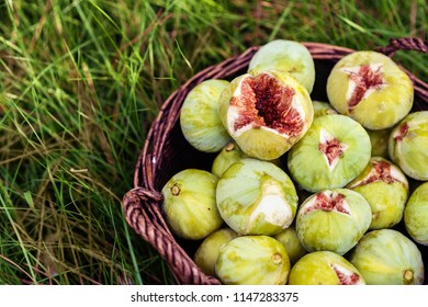 close up fresh green figs with green leaves in a wicker basket
