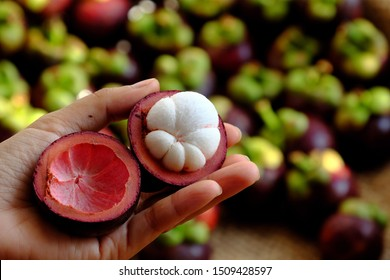 Close up fresh mangosteen cut in half in woman hand on blurred mangostana garcinia background, kind of Vietnamese tropical fruit that juicy, delicious, rich vitamin with violet hard rind