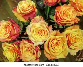 Close up of fresh orange roses background