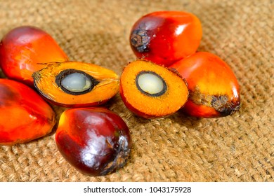 Close up of fresh palm oil fruits, selective focus.