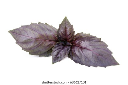 Close up of fresh red basil herb leaves isolated on white background.