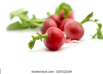 close up fresh red radish on white background