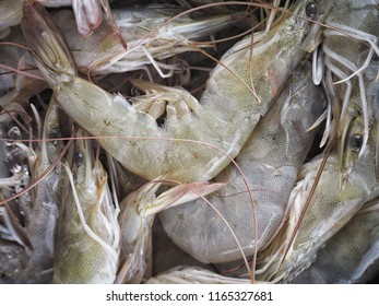 Close up of fresh shrimp seafood