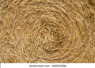 Close up front view of abstract bale of straw texture and background circle with natural daylight. Selective focus of yellow brown dry wild rye straws and some of its husk.