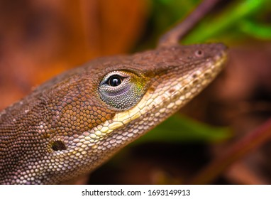 Gros plan sur un gecko