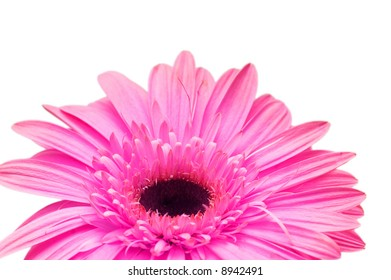Close up of gerber daisy isolated on the white