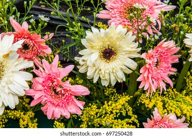 Close up of Gerbera flower, Thailand.
