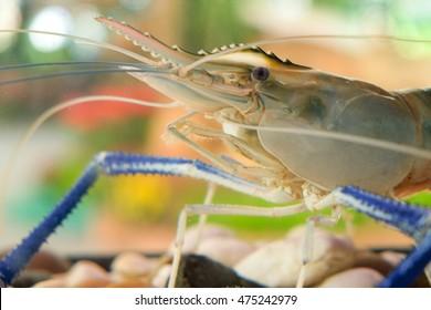 Close up Giant Freshwater Prawn