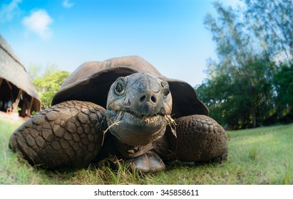 Close up of a giant tortoise taken on eye level with a wide angle lens