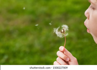 Close up of a girl blowing dandelion seeds across a fresh green background