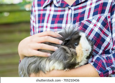Close Up Of Girl Looking After Pet Guinea Pig