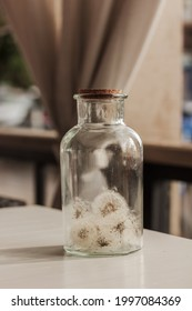 Close up of glass bottle with white blowballs, dandelions inside, lights in the background.  Dandelion, blowball decoration concept