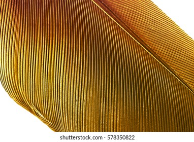 A close up of a gold feather isolated on a white background