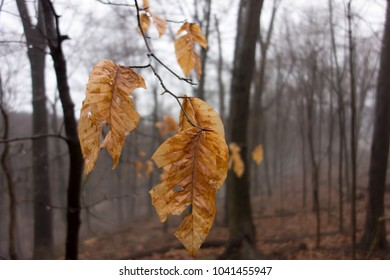 Close up of golden leaves in a murky forest.