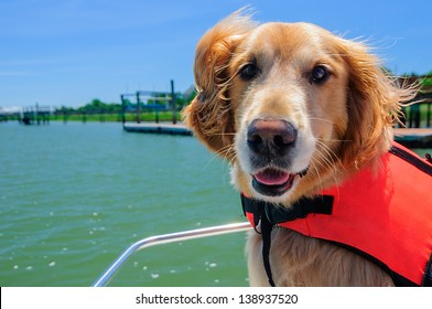 A Close Up of a Golden Retriever on a Boat