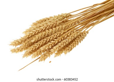 Close up of golden wheat ears, isolated on the white background.