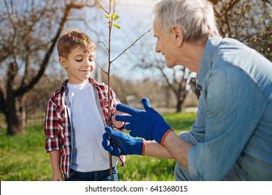 Close up of grandad and grandkid setting fruit tree