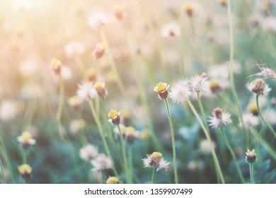 close up grass flower in garden, nature wallpaper background, world environment day, hello summer season, vintage tone