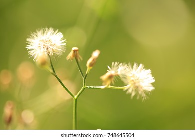 Close up grass flower with morning sunlight