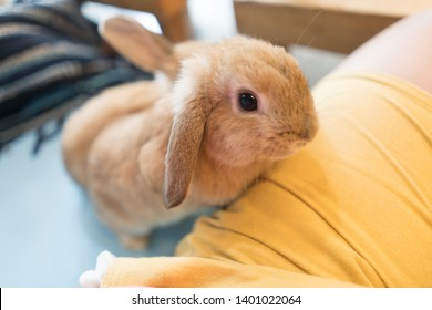 Close up gray baby rabbits 3 month old isolated on a coffee cafe background for children to feed animals. Short hair adorable baby rabbit, Beautiful easter bunny rabbit use for easter holiday concept