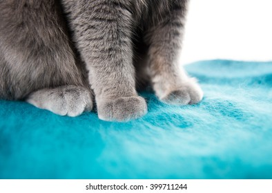 Close up of Gray Cat's Paws on Green Fluffy Sweater