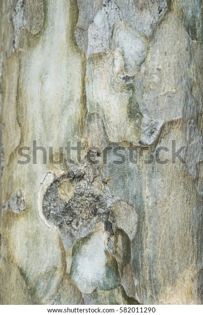 Close up of  gray and light brown tree bark texture background