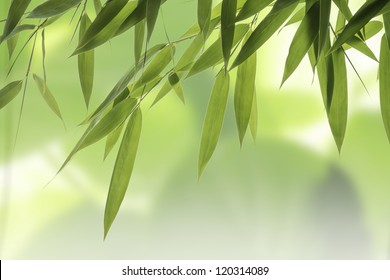 Close up from green Bamboo leaves