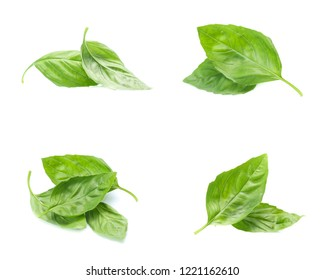 Close up green basil herb leaves isolated on white background. (set  mix   collection)