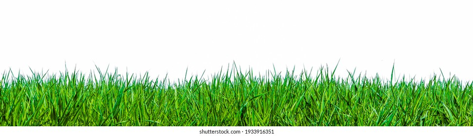 Close up of green blades of grass against a white background