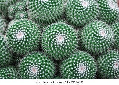close up green cactus background