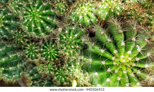 Close up green color of cactus