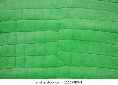 Close up of Green Crocodile,Alligator belly skin texture use for wallpaper background.Luxury Design pattern for Business and Fashion.Top view surface in backdrop.