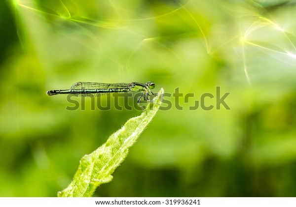 Close up of green dragonfly on grass leaf with sunlight.