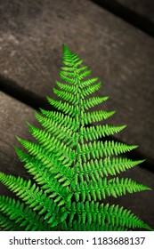 Close up of green fern on a wooden terrace